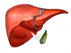 Печінка та жовчний міхур людини