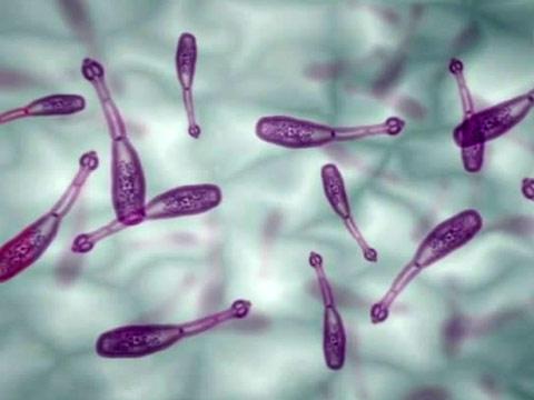 Ехінокок - причина появи паразитарних кіст печінки