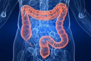 Анатомічне розташування кишківника в організмі людини