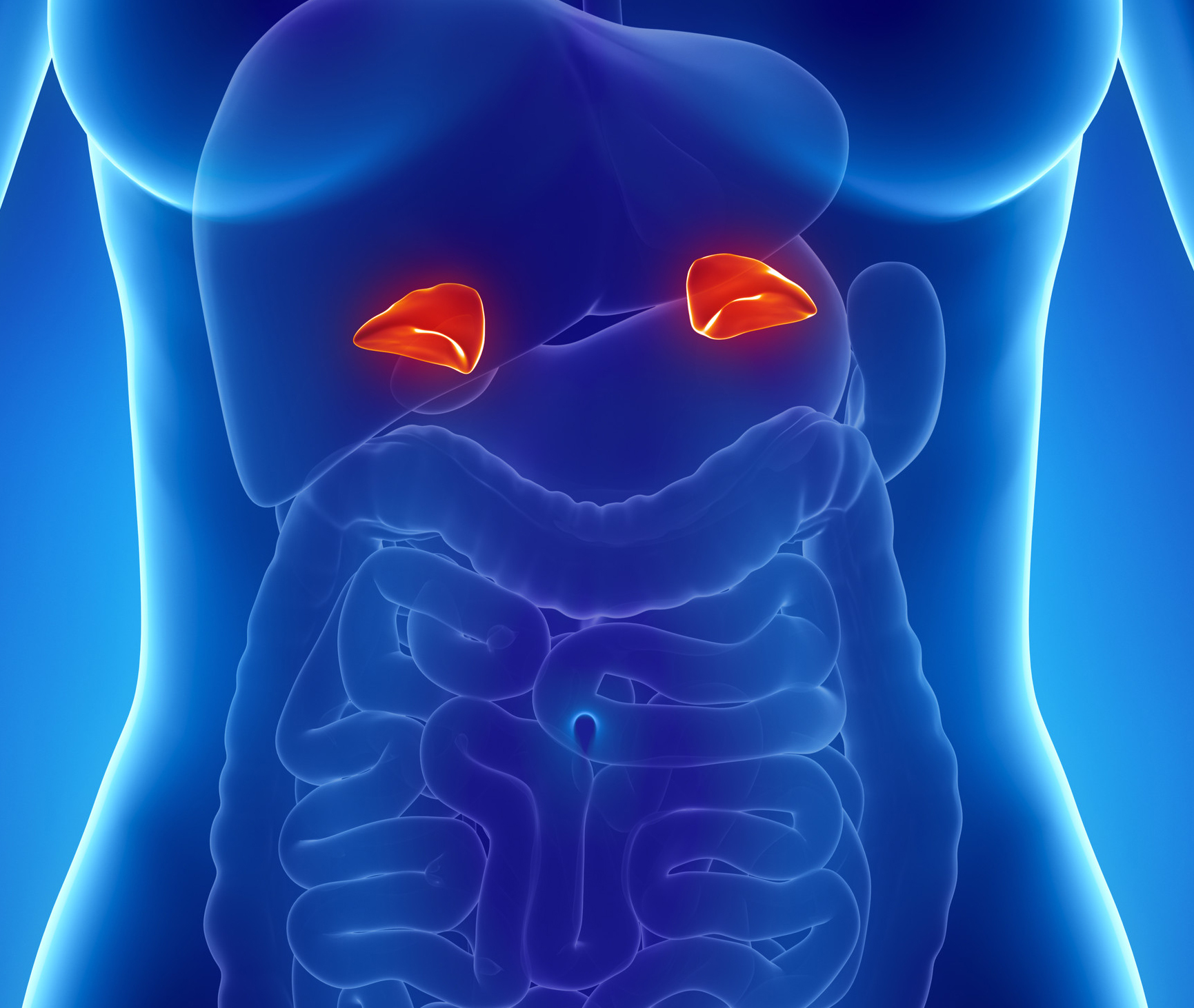 Анатомическое расположение надпочечников в организме человека