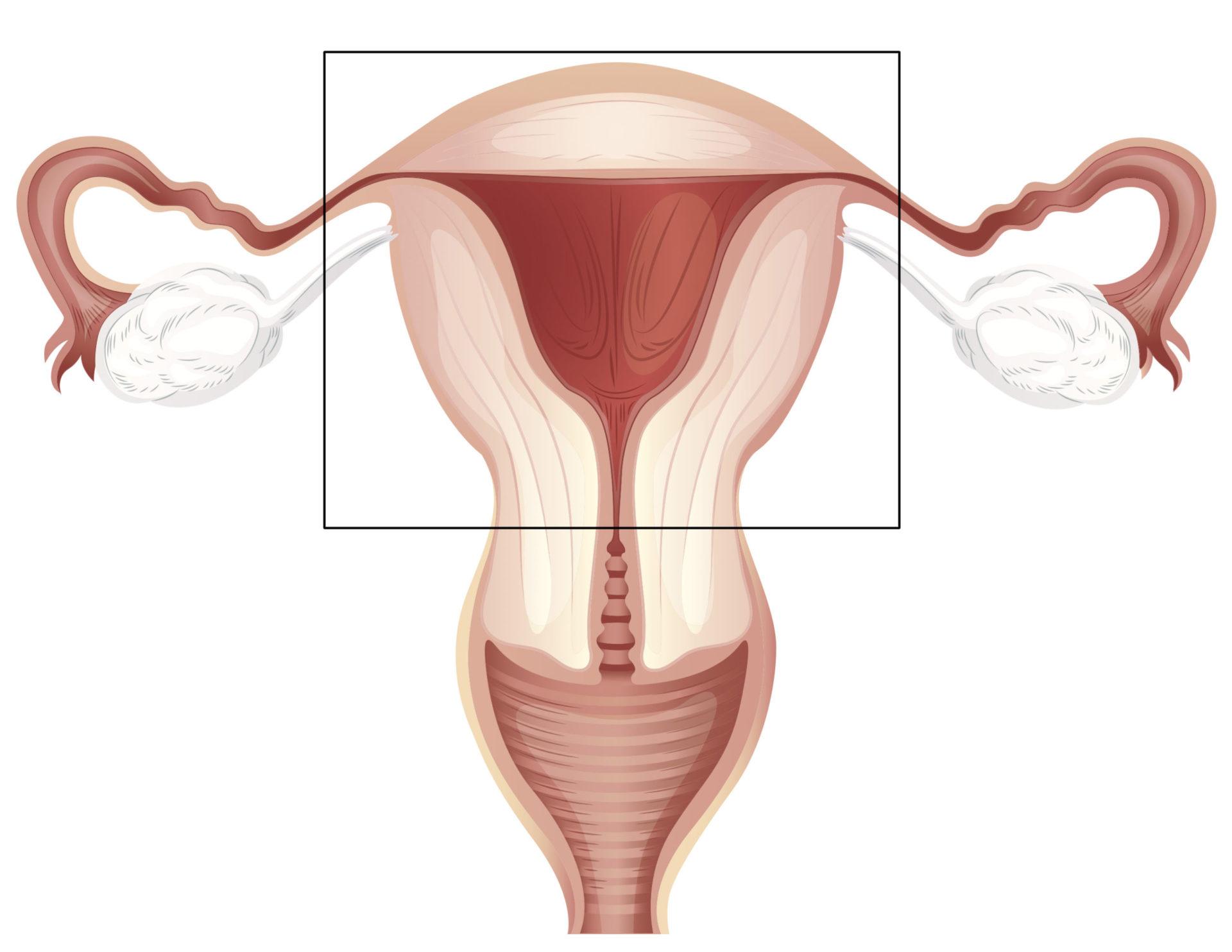 Размеры женских половых органов 20 фотография
